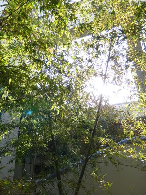 ちょうど竹がキレイに生えてきて露天風呂が気持ちいいですよ。