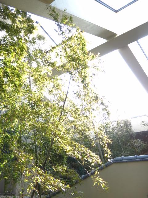 ちょうど今、竹の子が成長してるんです。